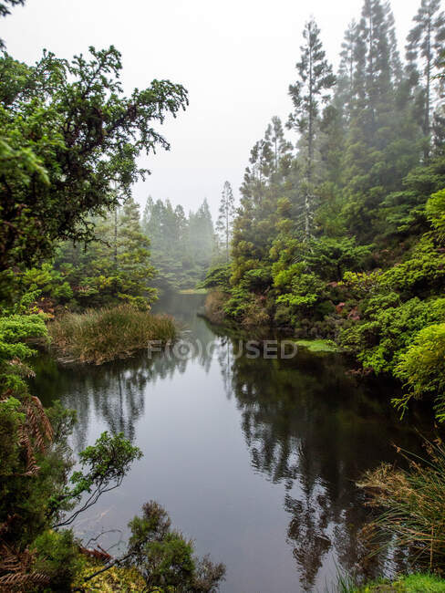 Perspective view of calm pond water flowing among lush green shores with green coniferous trees in mist — Stock Photo