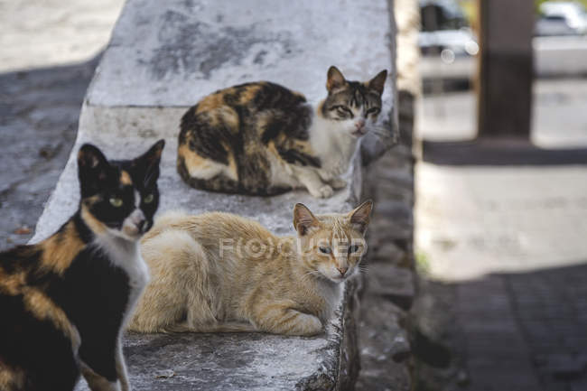 Colorful cute cats resting on concrete wall on street — Stock Photo