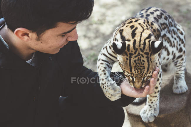 Giovane uomo che alimenta il leopardo in giardino zoologico — Foto stock