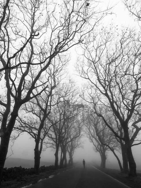 Silhueta de pessoa vagando na estrada vazia entre a árvore nua em névoa grossa — Fotografia de Stock