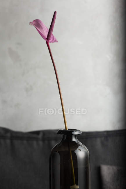 Purple lily flower in glass vase — Stock Photo