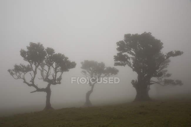 Силуэты деревьев в тумане — стоковое фото