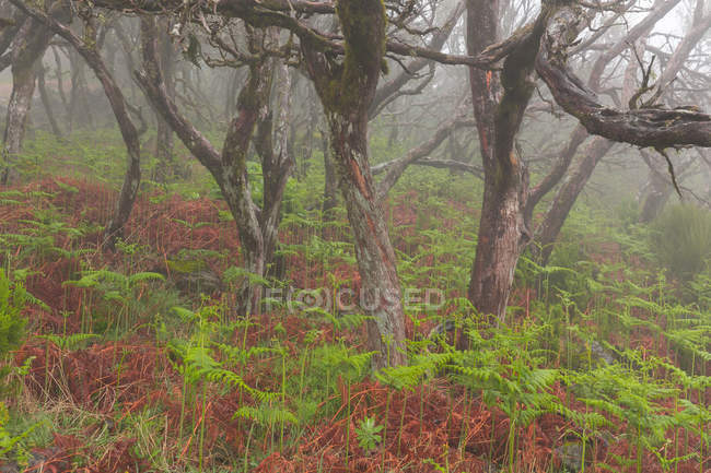 Bare trees growing in rainforest — Stock Photo
