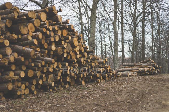 Pile d'arbre haché — Photo de stock
