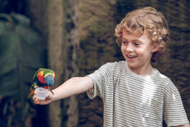 Ragazzo di età scolare che alimenta il pappagallo variopinto in giardino zoologico. — Foto stock