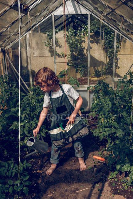 Boy watering plants in greenhouse — Stock Photo