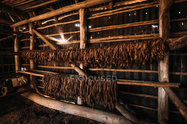 Interior del granero de madera con filas de secado de tabaco - foto de stock