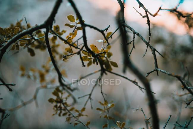 Ветви с осенними листьями — стоковое фото