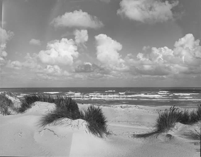 Noir et blanc vue pittoresque sur la côte sablonneuse avec de l'herbe par temps venteux, Belgique. — Photo de stock