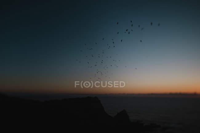Птахи, що летить над океаном — стокове фото