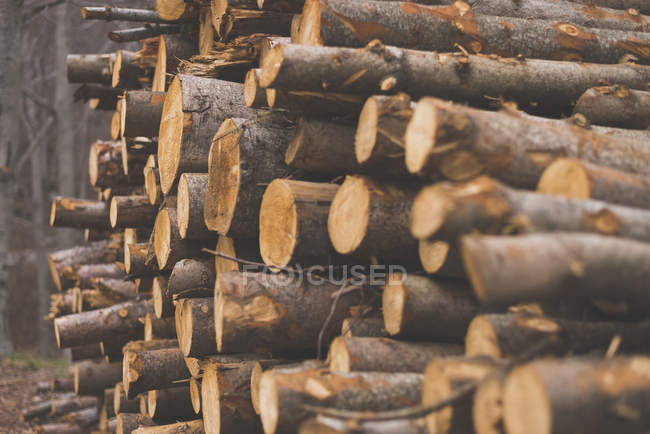 Pile de troncs d'arbres hachés — Photo de stock
