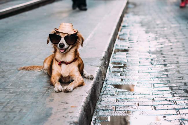 Гарна собака в сонцезахисні окуляри і капелюхи, лежачи на тротуарі — стокове фото