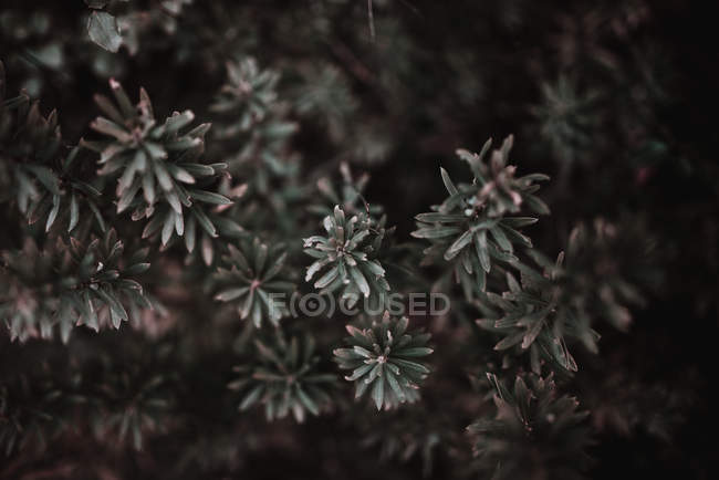 Branches with tiny leaves — Stock Photo