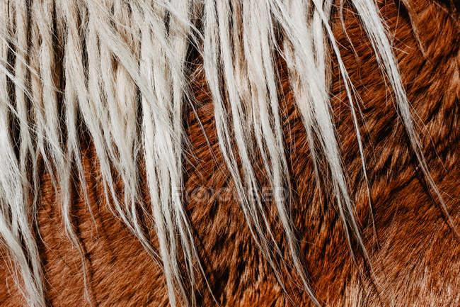 Chestnut horse mane — Stock Photo