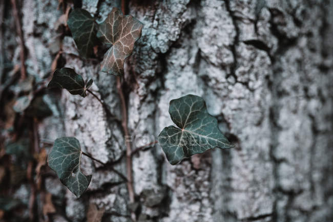 Pequeno ramo de árvore — Fotografia de Stock