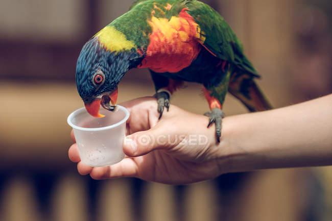 Крупным планом ребенок кормит разноцветного попугая — стоковое фото