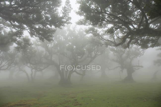 Nebbia nella foresta tropicale — Foto stock