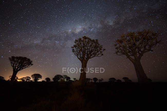 Árboles de sabana y cielo estrellado - foto de stock