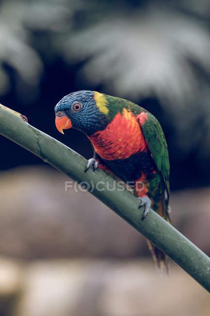 Крупный план яркого попугая, сидящего на ветке зоопарка . — стоковое фото