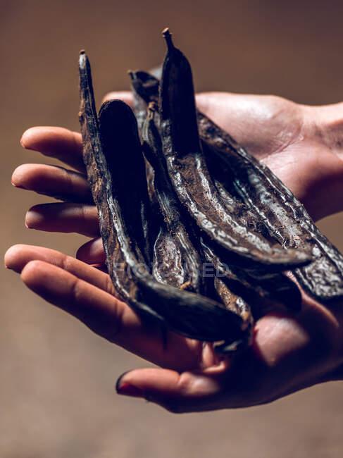 Руки невпізнаної людини, що тримає насіння оленів на фабриці.. — стокове фото