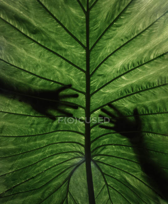 Silhouettes of hands over leaf — Stock Photo