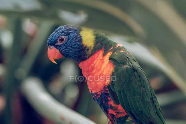 Nahaufnahme eines farbenfrohen Papageis, der im Zoo auf einem Ast hockt. — Stockfoto