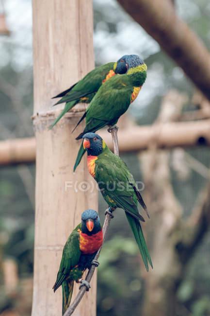 Крупный план ярких попугаев в зоопарке — стоковое фото