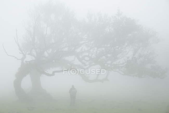 Silhouette de personne près de grand arbre — Photo de stock