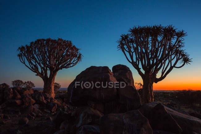 Arbres et rochers avec ciel nocturne — Photo de stock