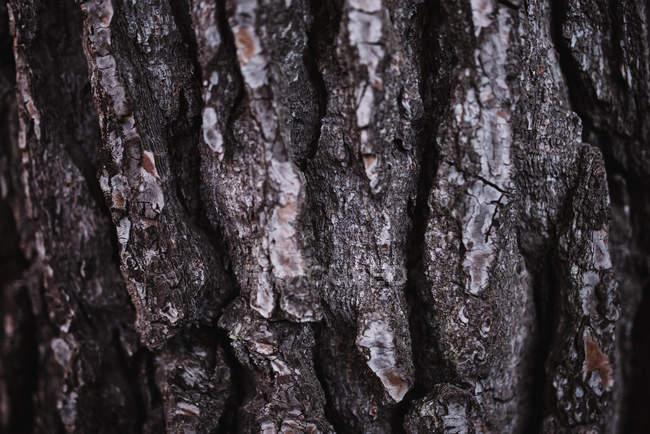 Texture écorce d'arbre — Photo de stock