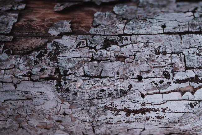 Дерево текстури кора — стокове фото