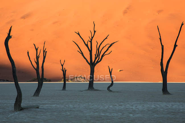 Árvores mortas na areia branca no deserto — Fotografia de Stock