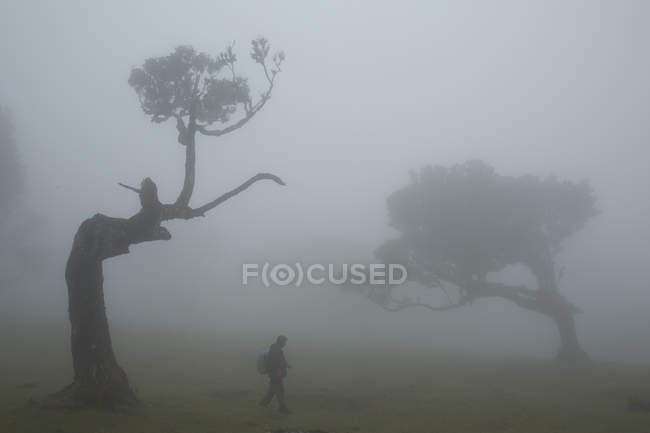 Dark silhouette near big trees — Stock Photo