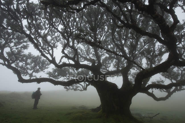 Dark silhouette near big tree — Stock Photo