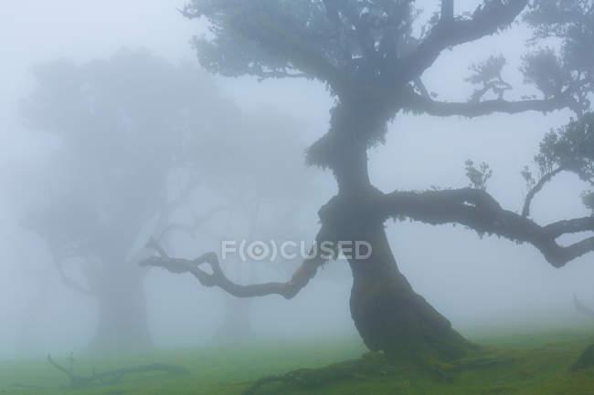Голые деревья в тропических лесах — стоковое фото
