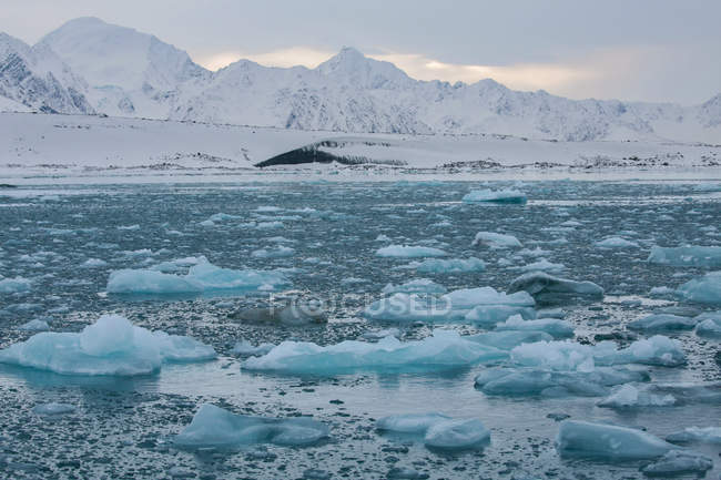 Ice floating in water — Stock Photo