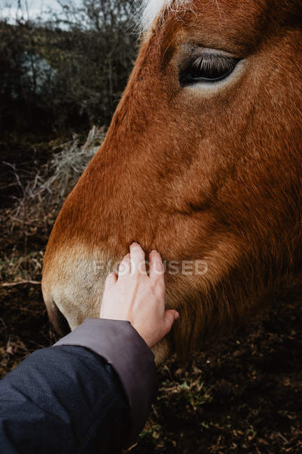 Human stroking brown horse — Stock Photo