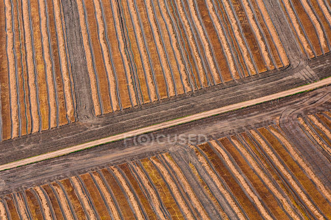 Striped fields in countryside — Stock Photo