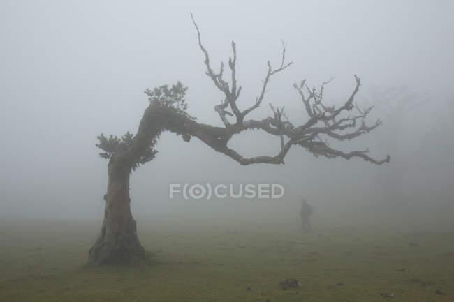 Темный силуэт возле большого дерева — стоковое фото