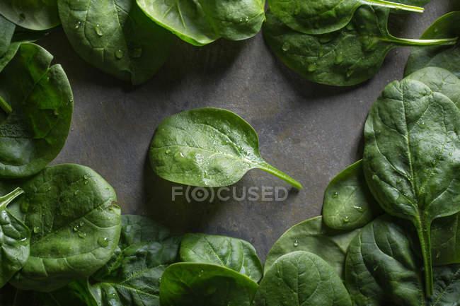 Folhas de espinafre verde no fundo cinza — Fotografia de Stock