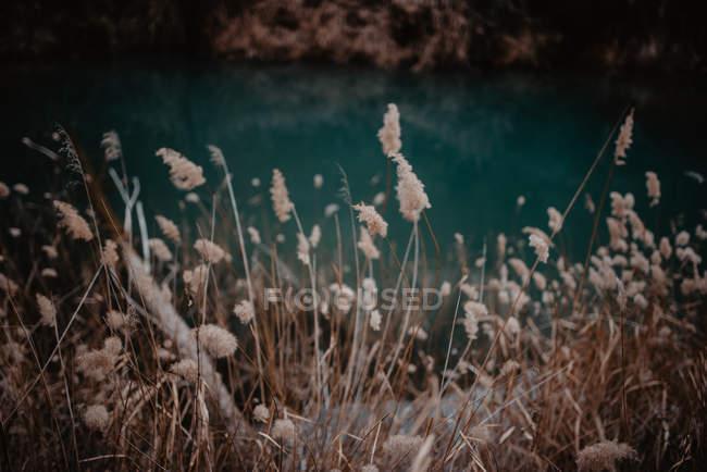 Grama seca e água azul — Fotografia de Stock