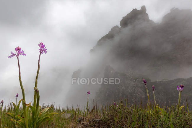 Pink wildflowers growing on meadow with cloudy mountains on background — Stock Photo