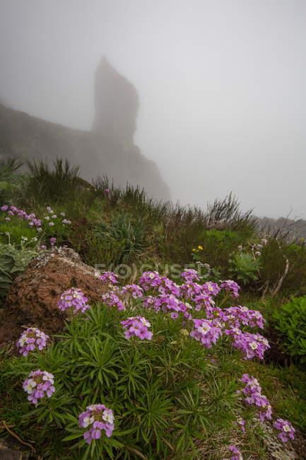 Рожевий польові квіти ростуть на луг з Скелясті гори в туман — стокове фото