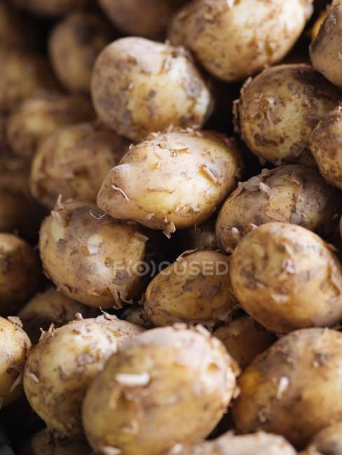 Nahaufnahme von frisch gepflückten Kartoffeln im heap — Stockfoto