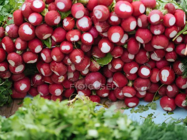 Cumulo di ravanello rosso fresco al mercato agricolo — Foto stock