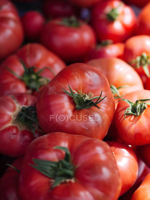 Heap of ripe red fresh picked tomatoes — Stock Photo