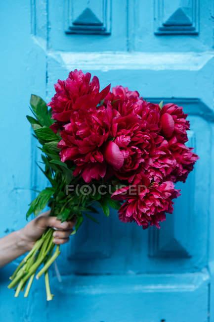 Рука с ярким букетом розовых пионов перед голубой деревянной дверью — стоковое фото