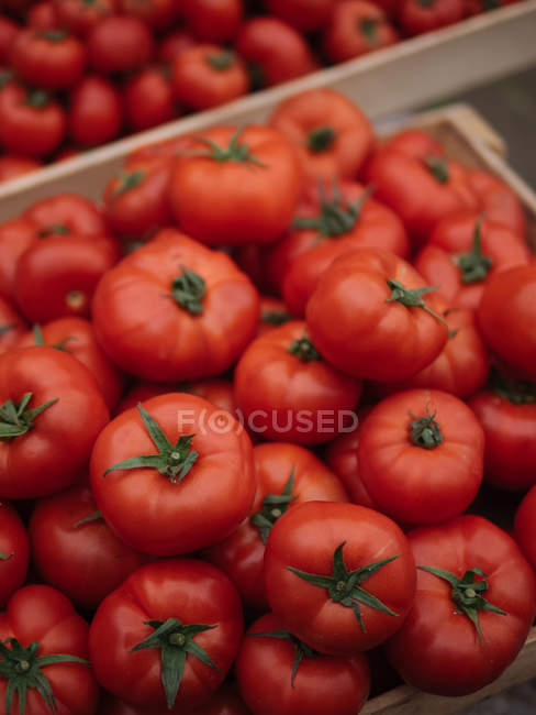 Heap of ripe red fresh picked tomatoes in wooden box — Stock Photo