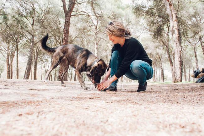 Большая коричневая собака и хозяин играют в лесу с мячом — стоковое фото