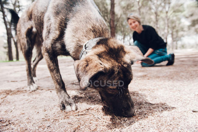Big brown dog sniffing ground in forest with female owner on background — Stock Photo
